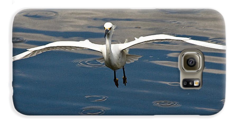 Snowy Egret Galaxy S6 Case featuring the photograph Gear Down by Christopher Holmes