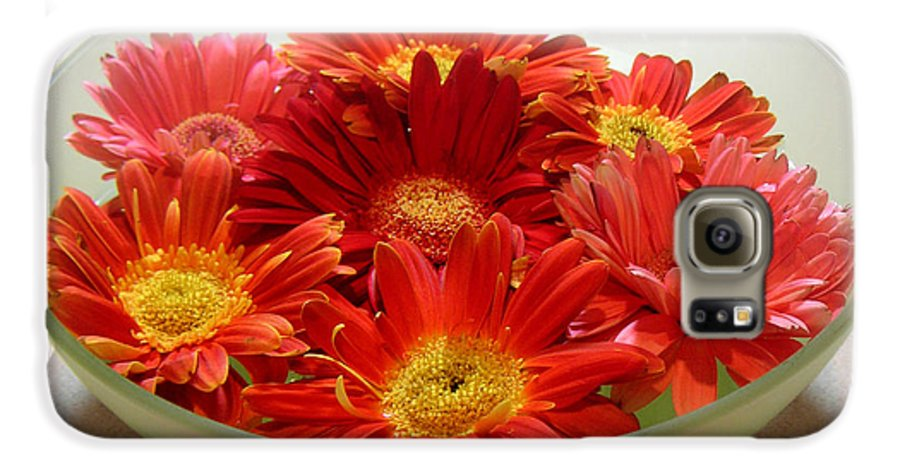 Nature Galaxy S6 Case featuring the photograph Gerbera Daisies - A Bowl Full by Lucyna A M Green
