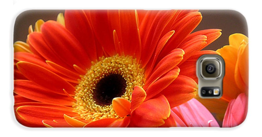 Nature Galaxy S6 Case featuring the photograph Gerbera Daisies - Luminous by Lucyna A M Green