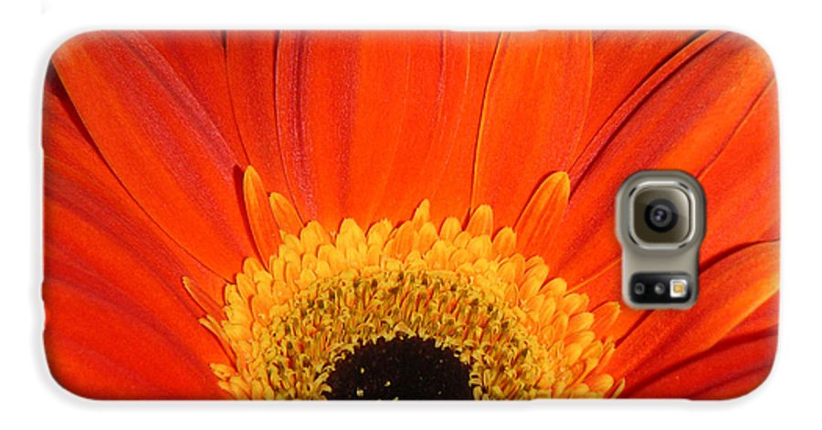 Nature Galaxy S6 Case featuring the photograph Gerbera Daisy - Glowing In The Dark by Lucyna A M Green