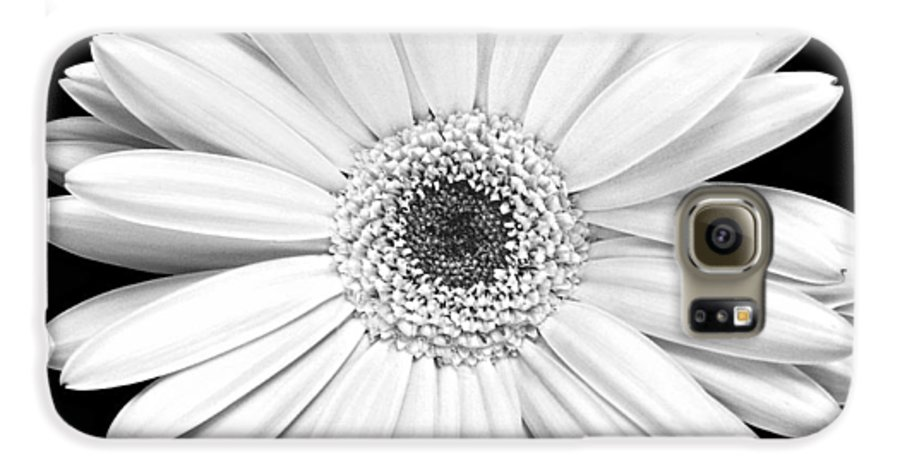 Gerber Galaxy S6 Case featuring the photograph Single Gerbera Daisy by Marilyn Hunt
