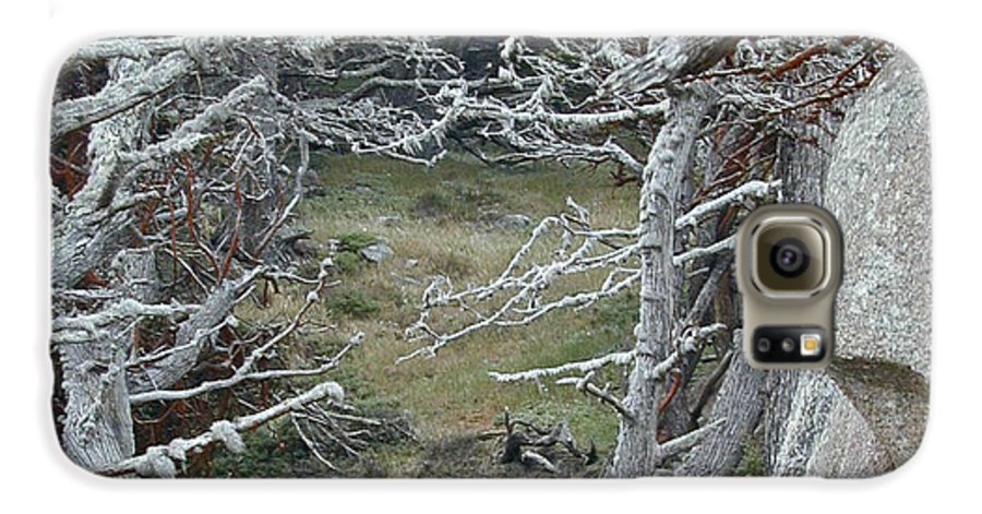 Lichens Galaxy S6 Case featuring the photograph Ghost Trees by Douglas Barnett