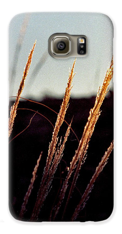 Grass Galaxy S6 Case featuring the photograph Glistening Grass by Randy Oberg