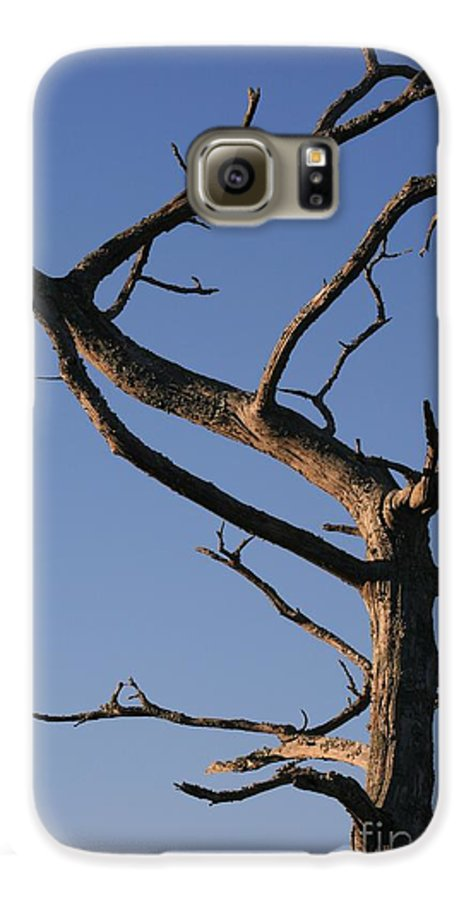 Tree Galaxy S6 Case featuring the photograph Gnarly Tree by Nadine Rippelmeyer