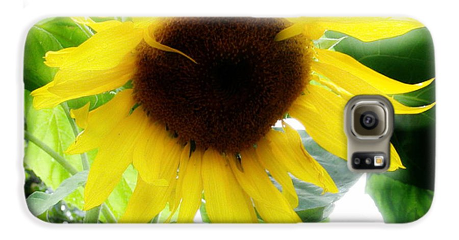 Sunflower Galaxy S6 Case featuring the photograph Golden Beauty by Idaho Scenic Images Linda Lantzy