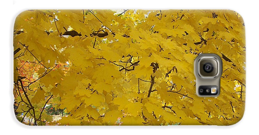 Fall Autum Trees Maple Yellow Galaxy S6 Case featuring the photograph Golden Canopy by Karin Dawn Kelshall- Best