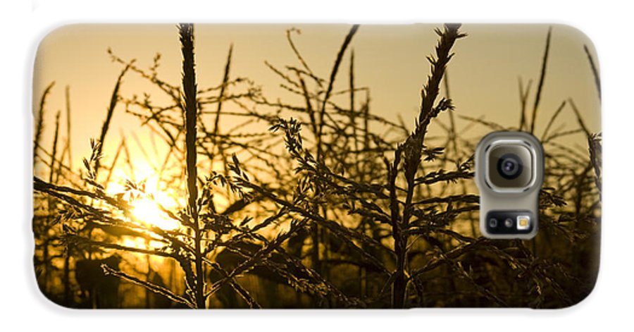 Golden Galaxy S6 Case featuring the photograph Golden Corn by Idaho Scenic Images Linda Lantzy