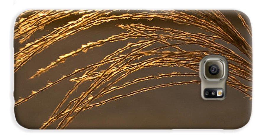 Grass Galaxy S6 Case featuring the photograph Golden Grass by Douglas Barnett