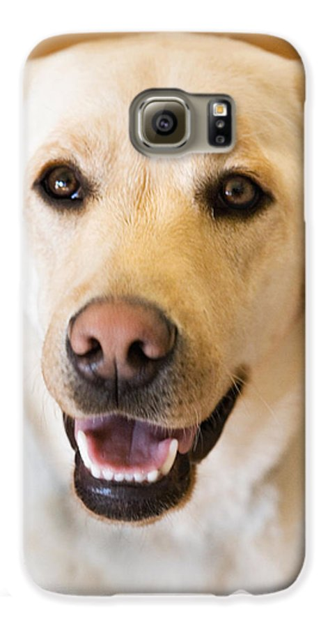 Lab Galaxy S6 Case featuring the photograph Golden Lab by Marilyn Hunt
