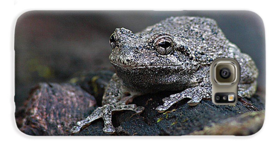 Frog Galaxy S6 Case featuring the photograph Gray Treefrog On A Log by Max Allen