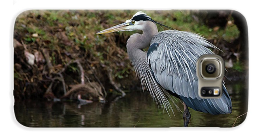 Hero Galaxy S6 Case featuring the photograph Great Blue Heron On The Watch by George Randy Bass