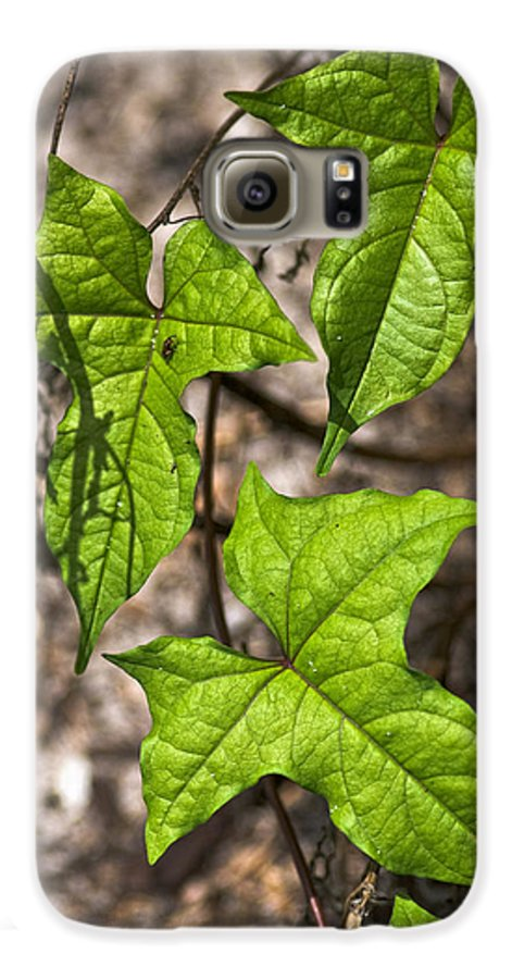 Green Galaxy S6 Case featuring the photograph Green Arrowheads by Christopher Holmes