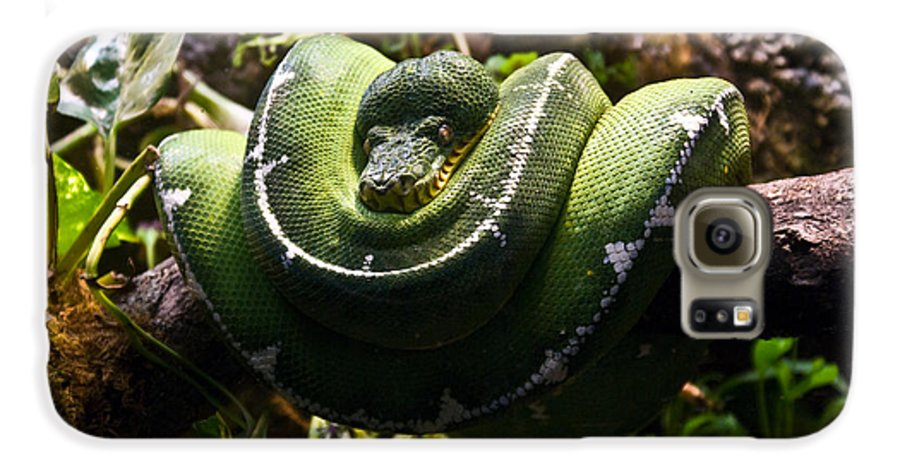 Green Galaxy S6 Case featuring the photograph Green Boa by Douglas Barnett