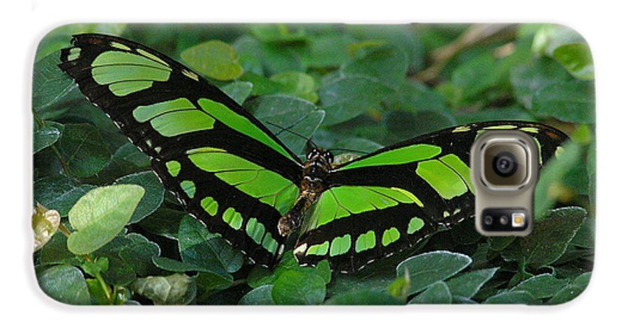 Green Galaxy S6 Case featuring the photograph Green Butterfly by Louise Magno