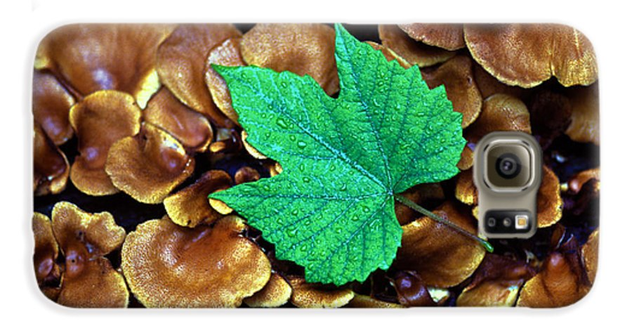Nature Galaxy S6 Case featuring the photograph Green Leaf On Fungus by Carl Purcell