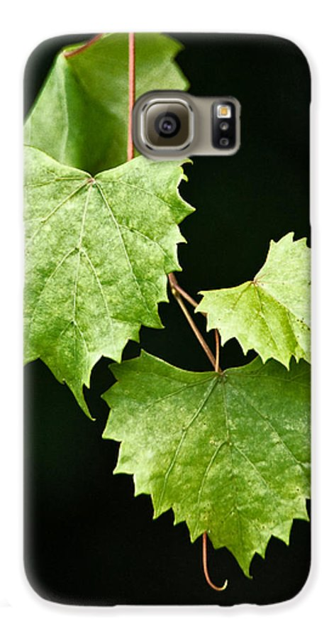 Flora Galaxy S6 Case featuring the photograph Green Leaves by Christopher Holmes