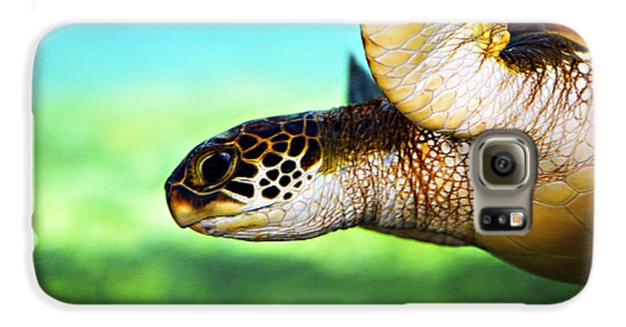 Green Galaxy S6 Case featuring the photograph Green Sea Turtle by Marilyn Hunt