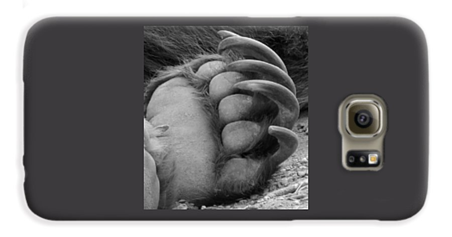 Grizzly Bear Galaxy S6 Case featuring the photograph Grizzly Claws by Tiffany Vest