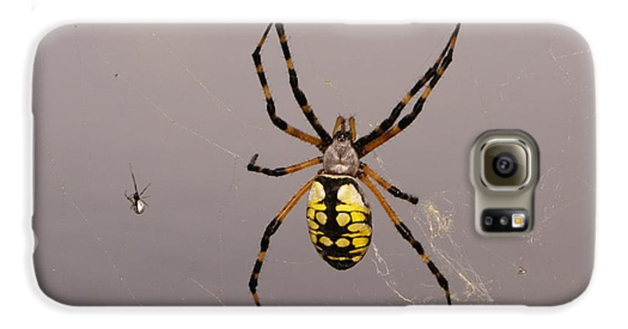 Spiders Galaxy S6 Case featuring the photograph Hanging In There by Debbie May