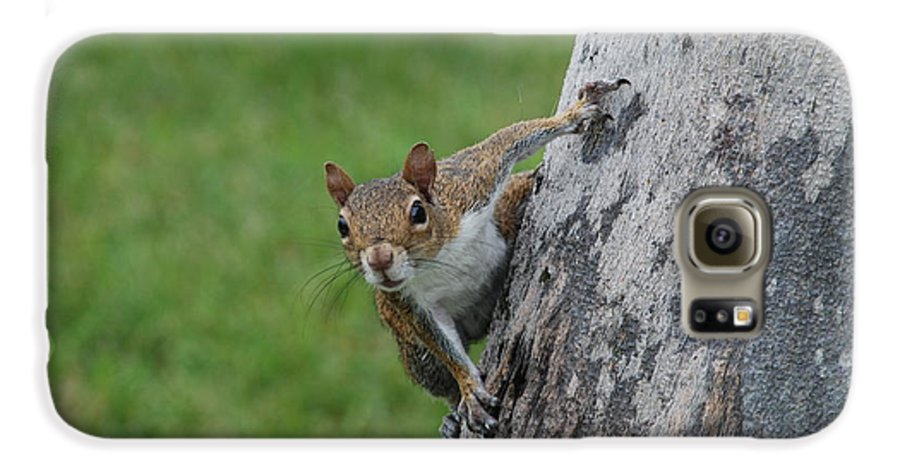 Squirrel Galaxy S6 Case featuring the photograph Hanging On by Rob Hans