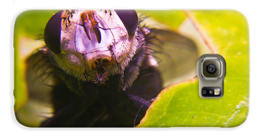 Fly Galaxy S6 Case featuring the photograph Hi There by Douglas Barnett
