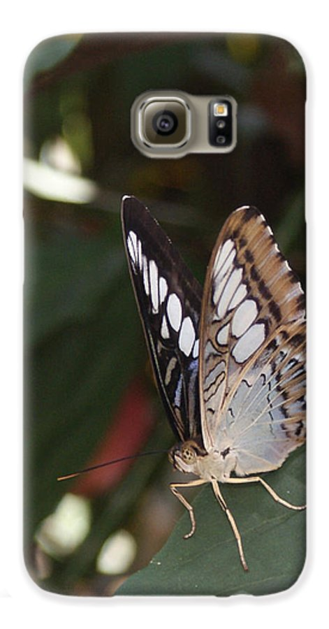 Butterfly Galaxy S6 Case featuring the photograph Hints Of Blue by Shelley Jones