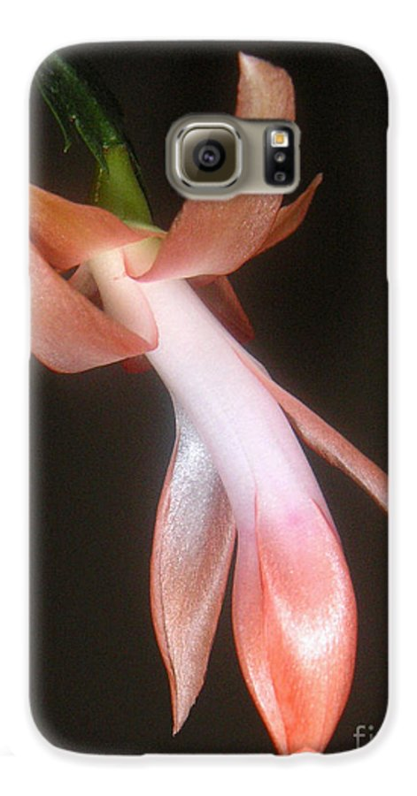 Nature Galaxy S6 Case featuring the photograph Holiday Cactus - In Night Light by Lucyna A M Green