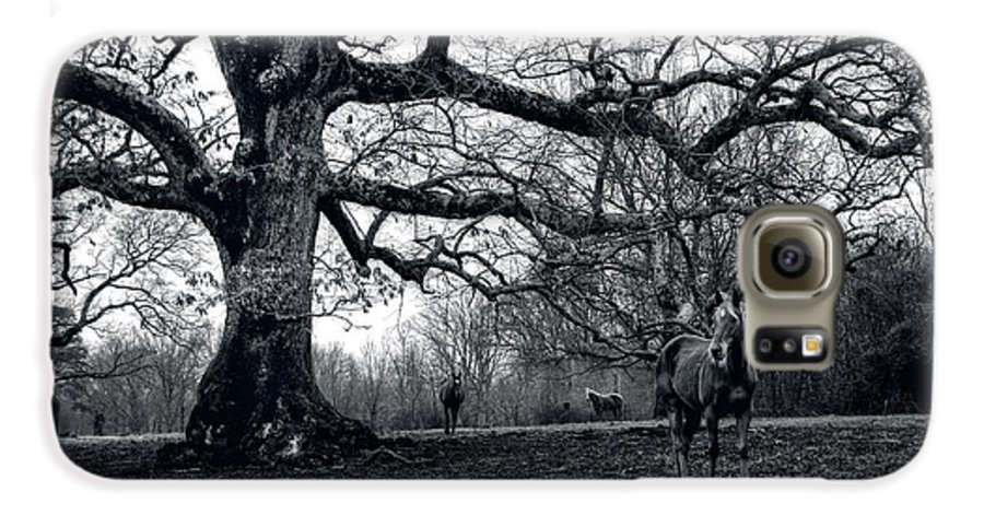 Horses Galaxy S6 Case featuring the photograph Horses On A Foggy Morning In Black And White by Greg and Chrystal Mimbs
