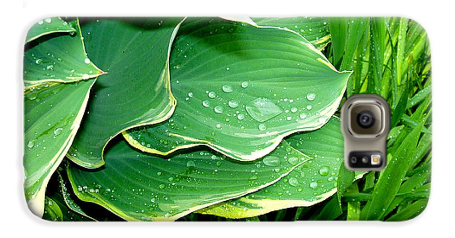 Hostas Galaxy S6 Case featuring the photograph Hosta Leaves And Waterdrops by Nancy Mueller