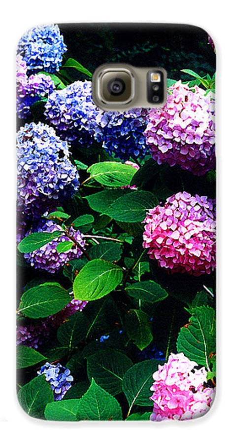Flowers Galaxy S6 Case featuring the photograph Hydrangeas by Nancy Mueller