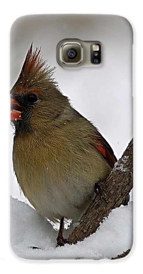 Bird Galaxy S6 Case featuring the photograph I Love Seeds by Gaby Swanson