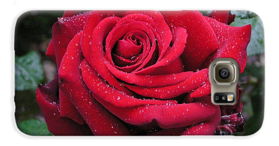 Rose Galaxy S6 Case featuring the photograph Icy Rose by Louise Magno