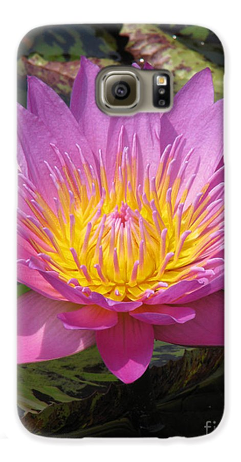 Lotus Galaxy S6 Case featuring the photograph In Position by Amanda Barcon