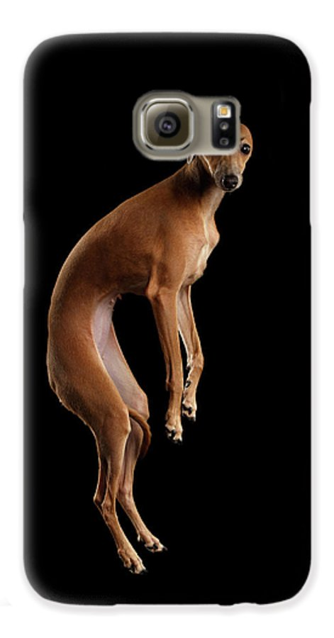 Greyhound Galaxy S6 Case featuring the photograph Italian Greyhound Dog Jumping, Hangs In Air, Looking Camera Isolated by Sergey Taran