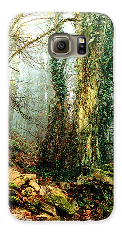 Ivy Galaxy S6 Case featuring the photograph Ivy In The Woods by Nancy Mueller