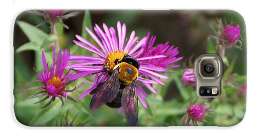 Bumble Bee Galaxy S6 Case featuring the photograph Just Beeing Debbie-may by Debbie May