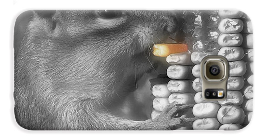 Chipmunk Galaxy S6 Case featuring the photograph Just One More Bite by Kenneth Krolikowski