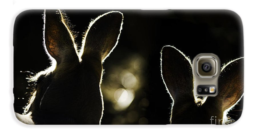 Kangaroo Galaxy S6 Case featuring the photograph Kangaroos Backlit by Avalon Fine Art Photography