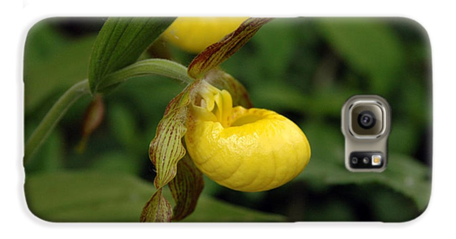 Ladyslipper Galaxy S6 Case featuring the photograph Lady Slipper by Kathy Schumann