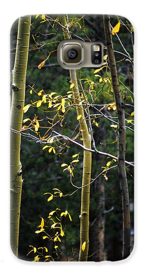 Aspen Galaxy S6 Case featuring the photograph Late Aspen by Jerry McElroy