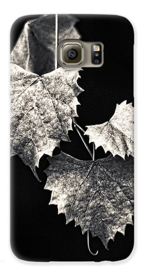 B&w Galaxy S6 Case featuring the photograph Leaves by Christopher Holmes