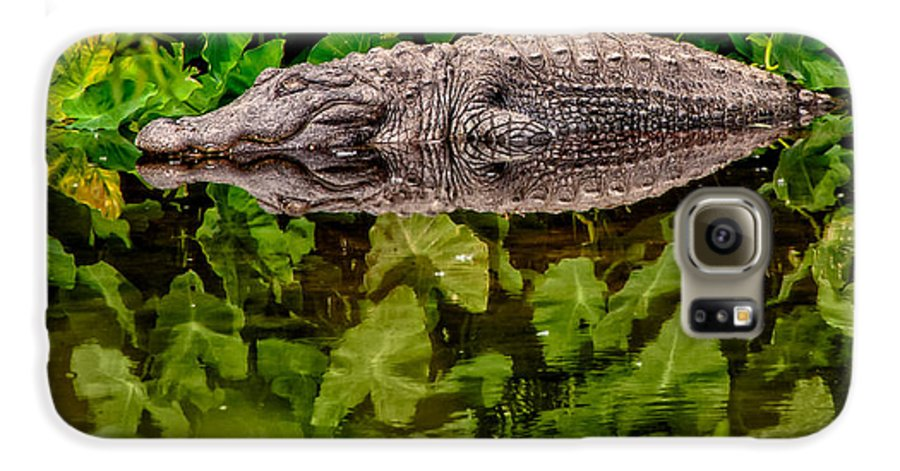Alligator Galaxy S6 Case featuring the photograph Let Sleeping Gators Lie by Christopher Holmes