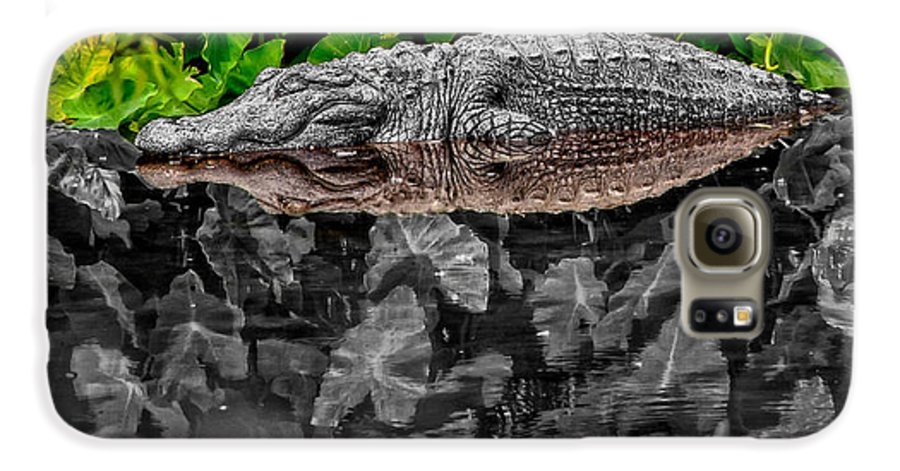 American Galaxy S6 Case featuring the photograph Let Sleeping Gators Lie - Mod by Christopher Holmes