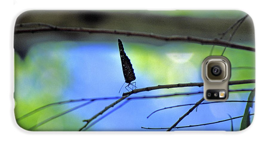 Butterfly Galaxy S6 Case featuring the photograph Life On The Edge by Randy Oberg