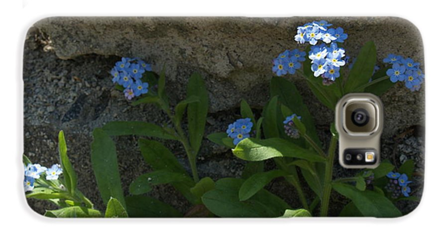 Forget-me-nots Galaxy S6 Case featuring the photograph Life Will Prevail by Anna Lisa Yoder