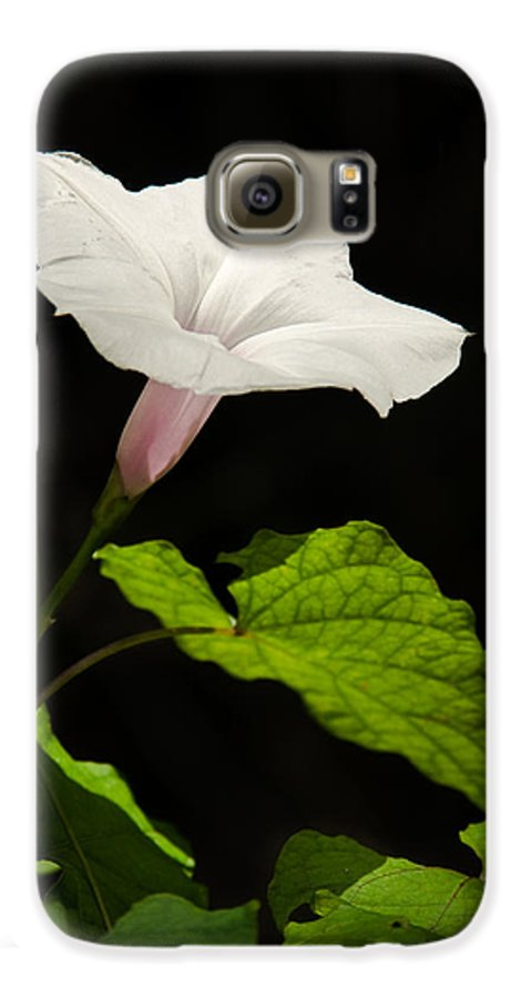 Flower Galaxy S6 Case featuring the photograph Light Out Of The Dark by Christopher Holmes