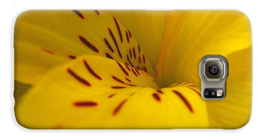 Yellow Galaxy S6 Case featuring the photograph Lily by Rhonda Barrett