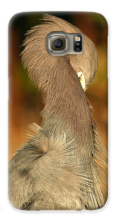 Heron Galaxy S6 Case featuring the photograph Little Blue Heron Feeling Bashful by Max Allen