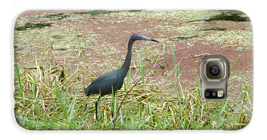 Nature Galaxy S6 Case featuring the photograph Little Blue Heron by Kathy Schumann