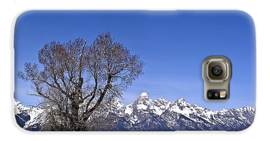 Tree Galaxy S6 Case featuring the photograph Lone Tree At Tetons by Douglas Barnett